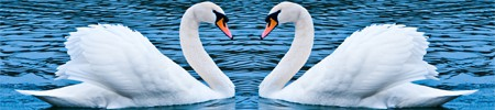 Two Swans Facing Each Other